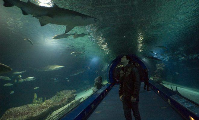 Túnel de los tiburones