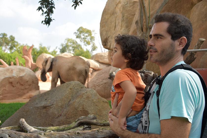 Viendo a los elefantes