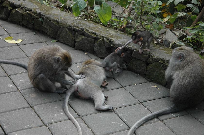 Haciendo el mono en Monkey Forest