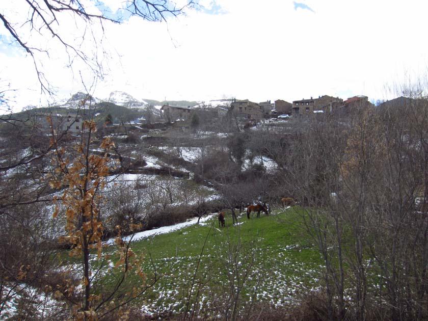 Caballos en Valverde de los Arroyos
