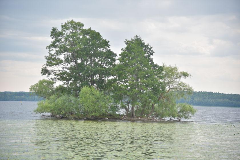 Disfrutando de los vistas del lago Malaren