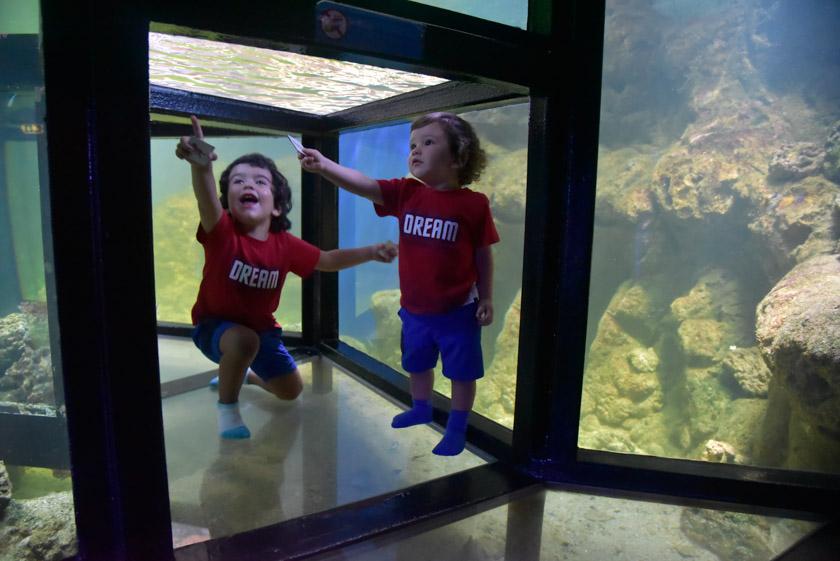 Daniel y Hugo disfrutando del acuario de Djurgarden