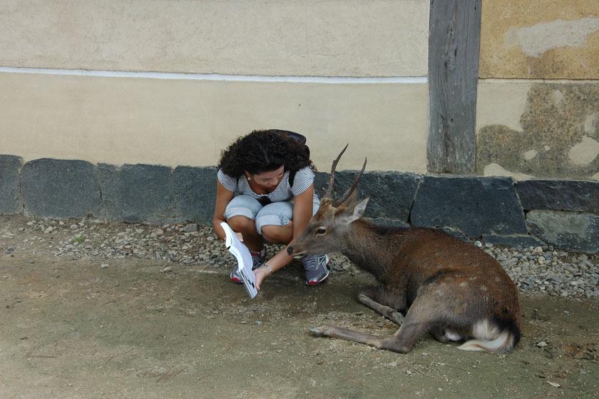 Enseñando a leer a los ciervos jajaja