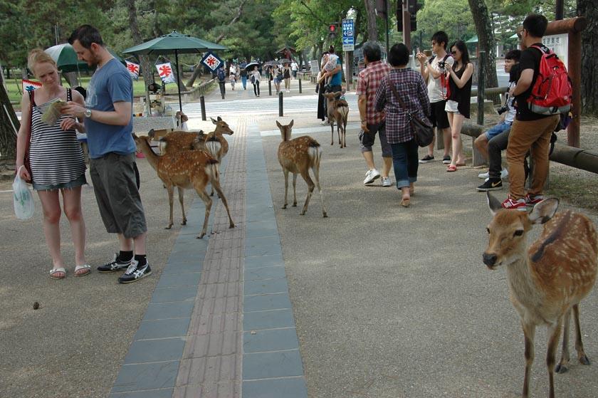 Seguimos paseando con los simpáticos ciervos