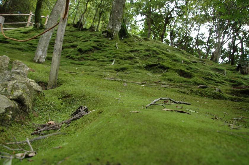 Bosque de Musgo de Ginkakuji