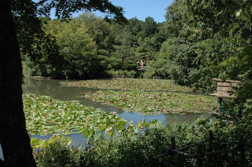 Jardín de nenúfares en Ryoanji