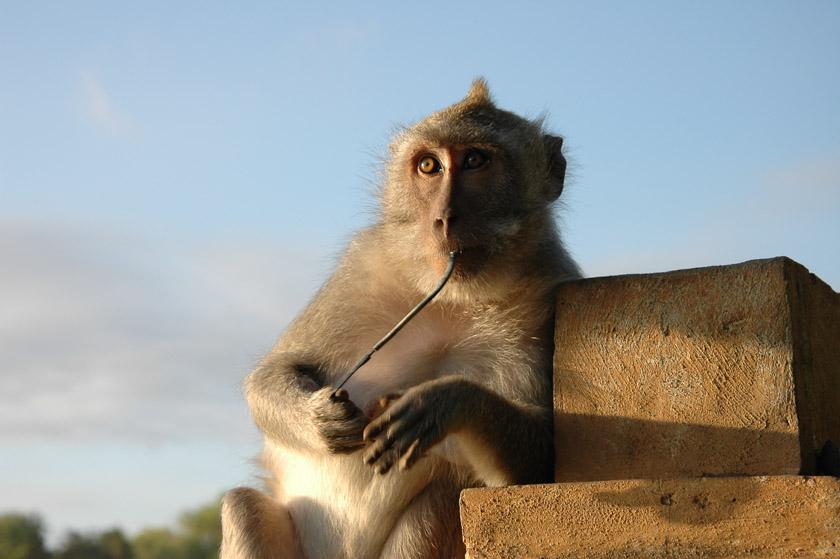 Monos en Pura Luhur Uluwatu