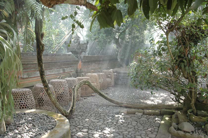 Otra de las tradiciones balinesas, la cría de gallos