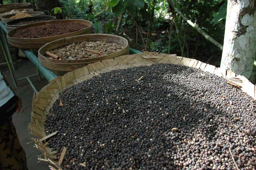 Distintos tipos de cafés balineses