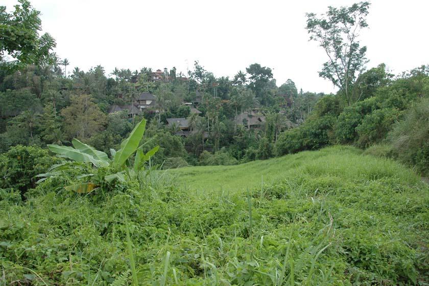 Increíbles vistas de los campos de Ubud