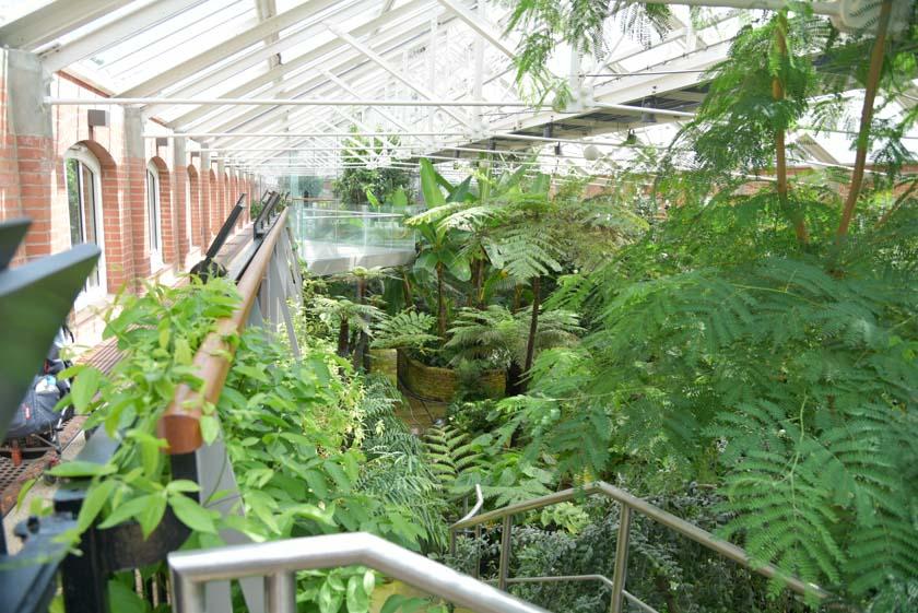Interior de la Casa de los Barrancos en el jardín botánico de Belfast