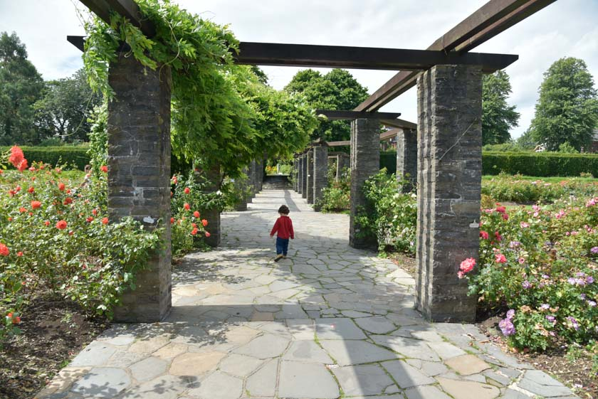Paseo por el jardín de las rosas en el jardín botánico de Belfast