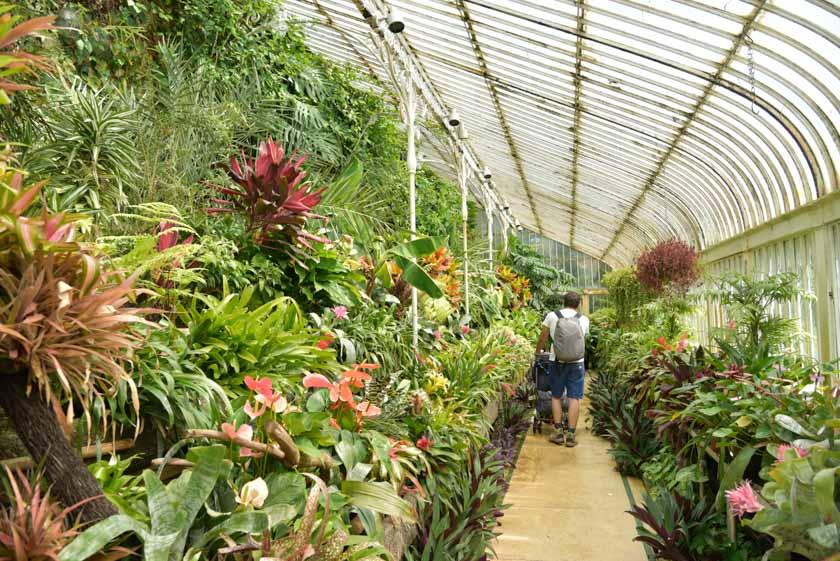 Paseando por la Casa de las Palmeras en el jardín botánico de Belfast
