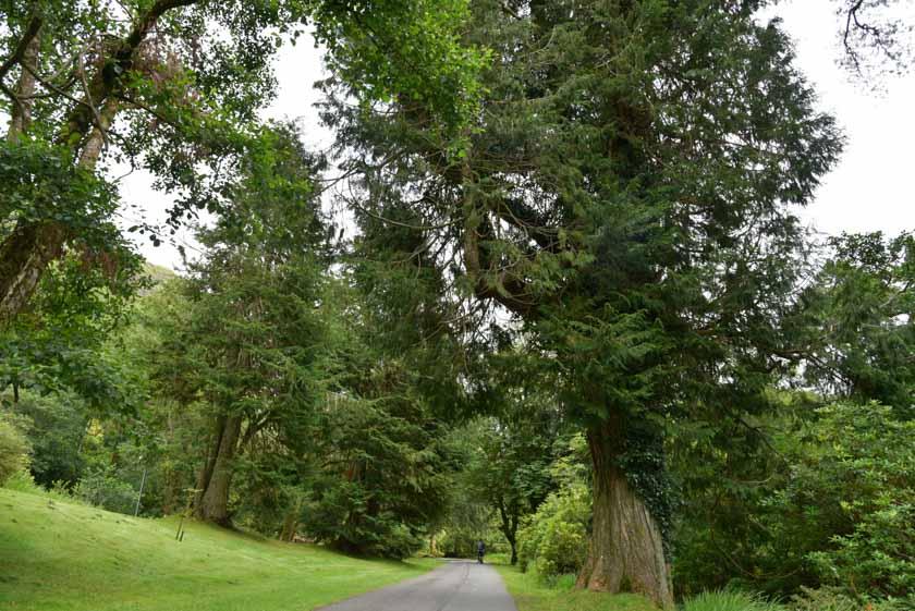 Camino de la Iglesia de Kylemore