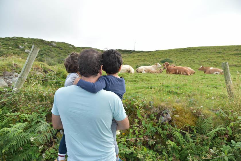 Viendo las vacas en Sky Road