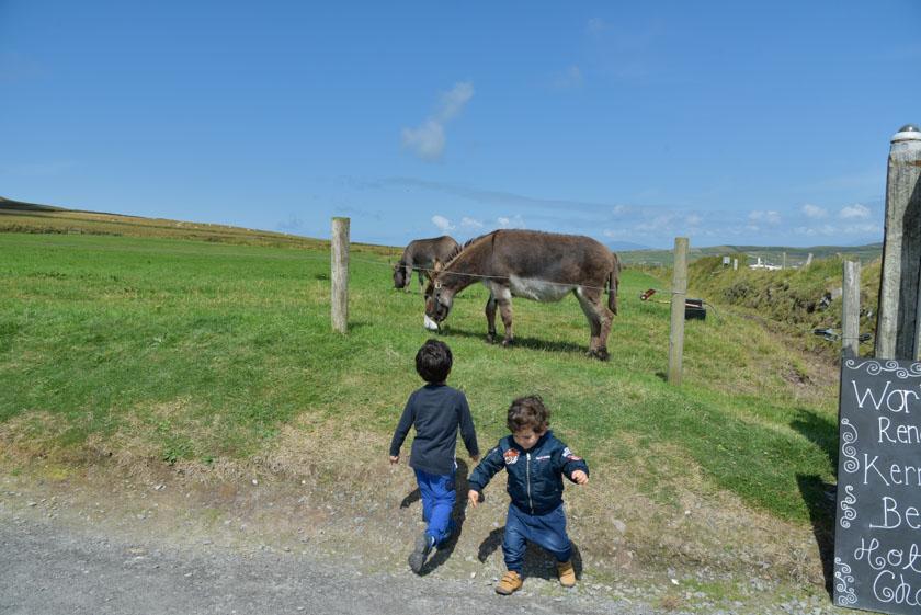 Daniel y Hugo disfrutando de los animales en el anillo de Kerry