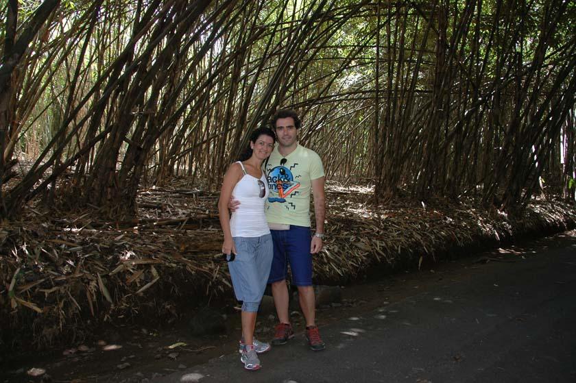Un curioso boque de bambú al norte de Penglipuran