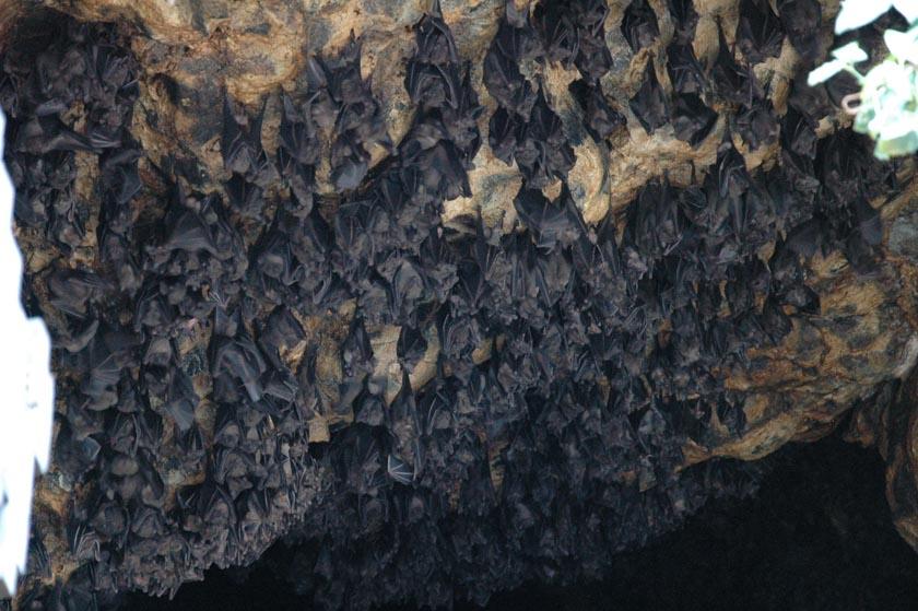 Los murciélagos son los habitantes de excepción en Goa Lawah