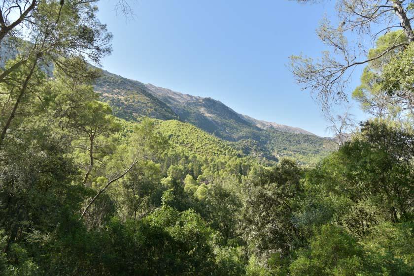 Gran variedad de pinos en la Sierra de Cazorla