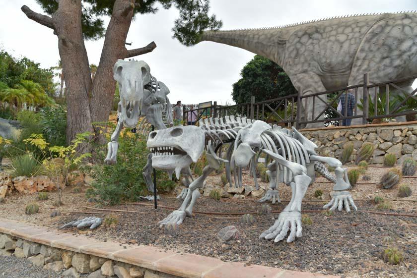 También hay tiempo para ver los huesos de los dinosaurios