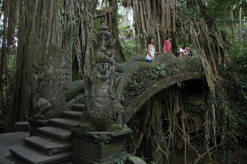 Bienvenidos a Monkey Forest