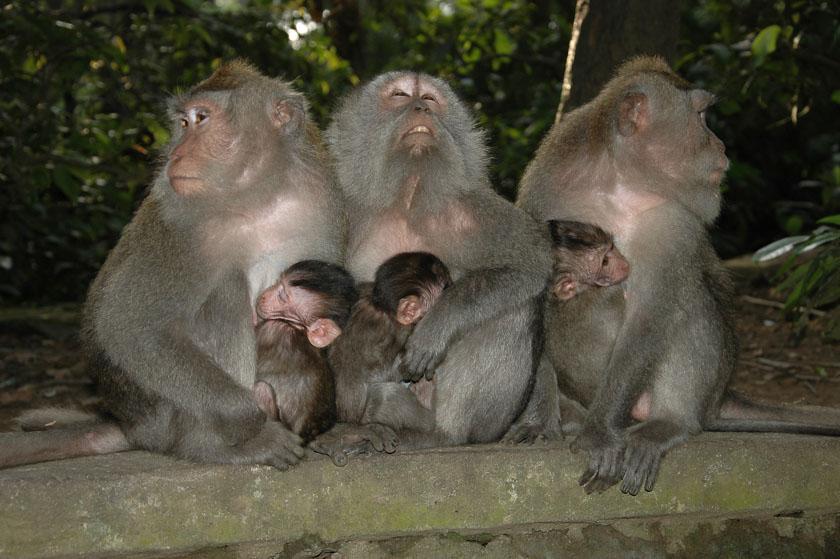 Posando para la foto en Monkey Forest