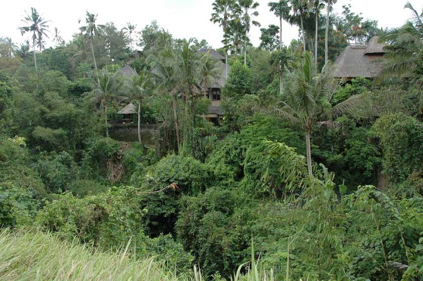 Increíble naturaleza en Ubud