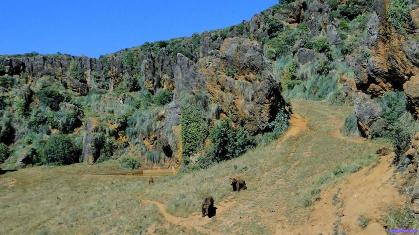 Zona de los osos en Cabárceno